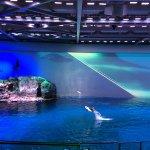Photo of Shedd Aquarium