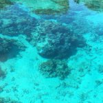 Photo de Pure snorkeling par Reef Discovery