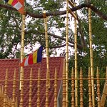 The Maha Bodhi Branch supported by pillars