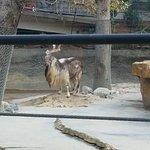 Los Angeles Zoo & Botanical Gardens