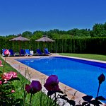 Large fenced and landscaped shared pool