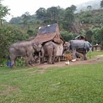 Photo of Elephant Steps Chiang Rai