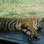 Photo of Samui Aquarium and Tiger Zoo