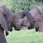 Photo of Senyati Safari Camp