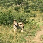 Photo of Heritage Day Tours & Safaris