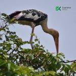 Exotic birds at Kumarakom!