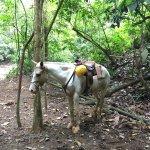 Photo of Vista Los Suenos Adventure Park
