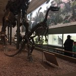 ภาพถ่ายของ Yale Peabody Museum of Natural History