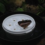 Butterfly having a meal