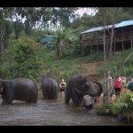 Excursion to Chiang Mai Elephant Jungle Sanctuary