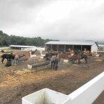 Photo de Nasu Alpaca Farm