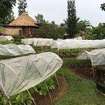 Photo of Bagus Jati Health & Wellbeing Retreat
