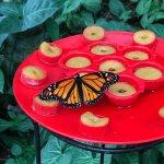 Photo of Butterfly Park of Benalmadena