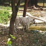 Photo de Sri Chamarajendra Zoological Gardens