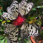Visit Entopia for fabulous butterflies and more