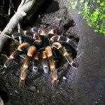 Monteverde Wildlife Refuge照片