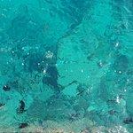 Photo of Sea World