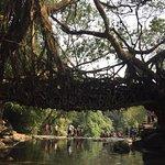 Roots Bridges의 사진