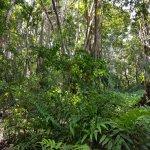 Taonaba maison de la mangrove une perle à mettre en valeur