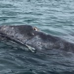 See the grey whales if you can...bit of a drive and we got lucky seeing many whales