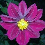 Una de las flores del lugar