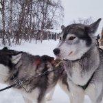 Foto de Davvi Arctic Lodge