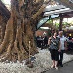 Sr Ayres e Maria Elena curtindo o domingo junto a Figueira de 100 anos!