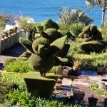 View of topiary from our balcony