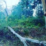 Aahana the Corbett Wilderness Foto