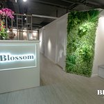 Photo of Blossom The Secret Garden