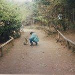 Photo de La Montagne des Singes