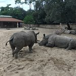 Photo de Zoo de la Palmyre