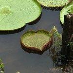 Photo of Parque Ecologico Januari