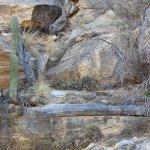 Sabino Canyon textures
