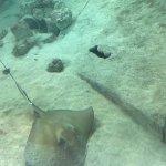 aquarium tank with many fish