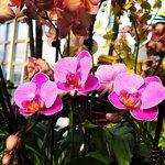 富蘭克林溫室植物園照片