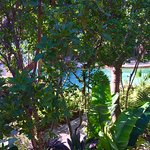 View of Lazy River from my Flamingo Villa room