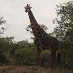 Foto de Vuyatela Lodge & Galago Camp