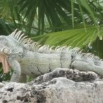 Photo de Lions Dive & Beach Resort Curacao