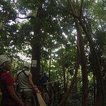 Treetop Adventure Park Foto