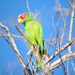 Foto de Bird Guide Cornelio