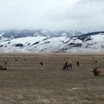 Foto de National Elk Refuge