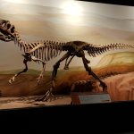 Photo of Museo Paleontologico Egidio Feruglio
