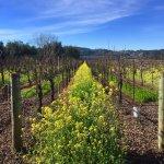 Photo de Alexander Valley Vineyards