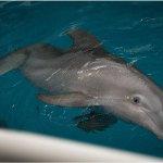 Dolphin-07 Winter_fav_large.jpg