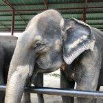 Fotografie: Elephantstay