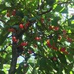Photo of Abraham's Spice Garden