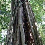 Photo de Curi Cancha Reserve