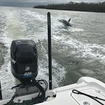 Dolphin (mother and calf) chasing the wake of Rob's boat