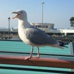 Photo of ibis Styles Deauville Villers